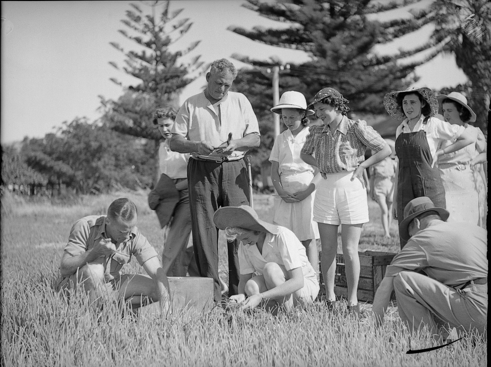 National service onion planting in Spearwood, 1942