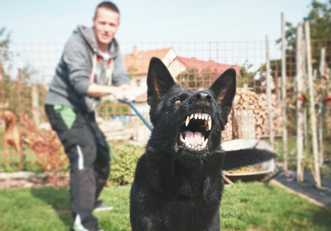Aggressive/Reactive Dog Training - Sold out